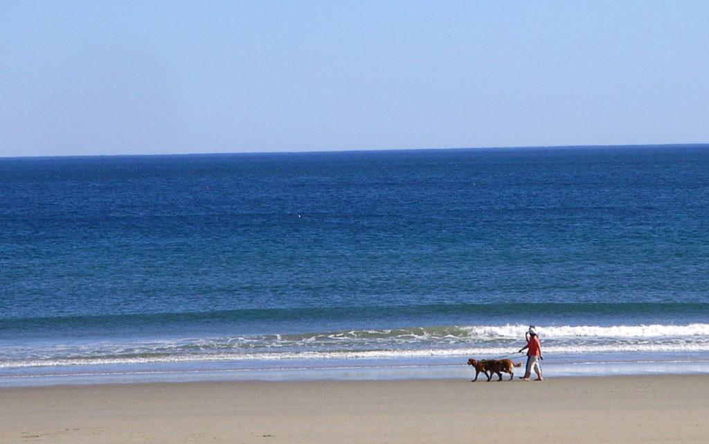 wells_me_beach_dog_wakers